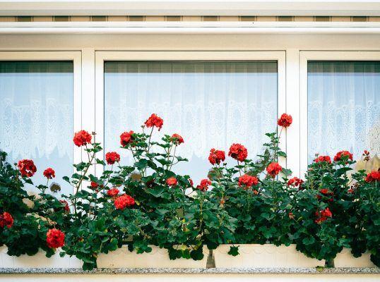 ventanales
