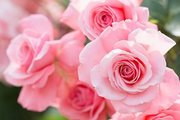 mantener las flores