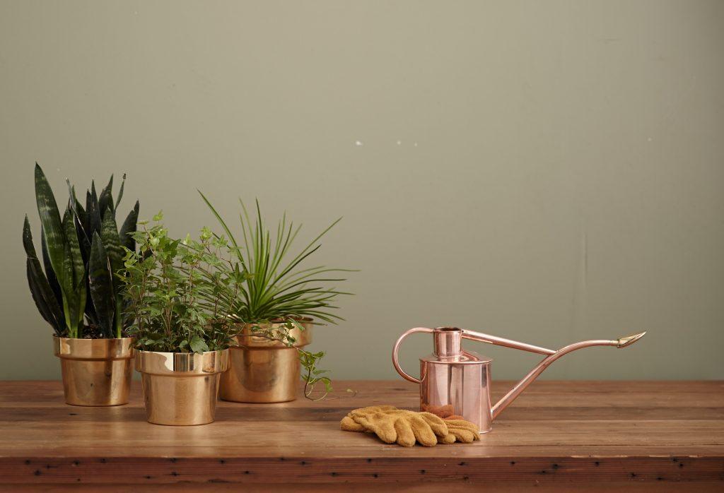 Higiene de las plantas