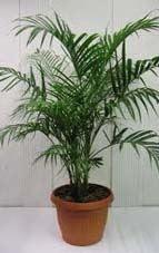 Purifica el aire de tu hogar u oficina con las plantas