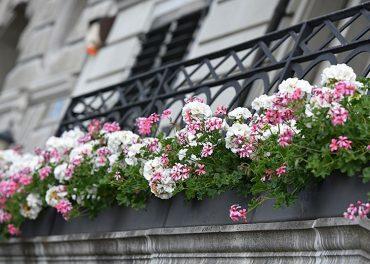 Decorar el balcón con flores