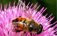 Evitar insectos de manera natural