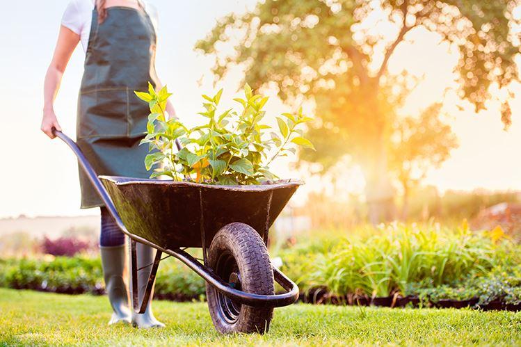 Prepara tu jardín para el verano