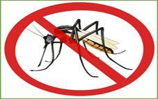 colocar mosquiteras para combatir mosquitos
