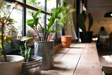 como cuidar las plantas de interior