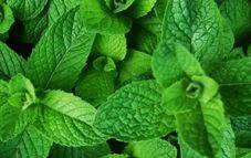 Decora tu cocina con plantas aromáticas