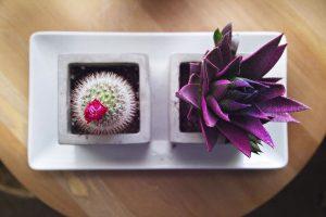 cactus decoracion