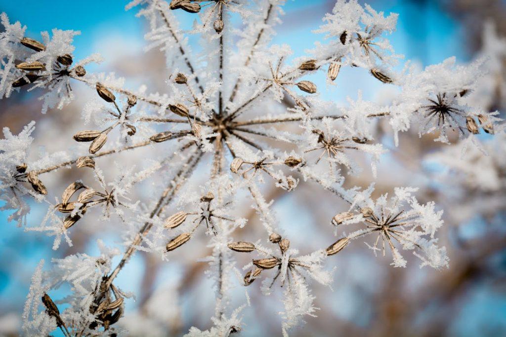 plantas invierno