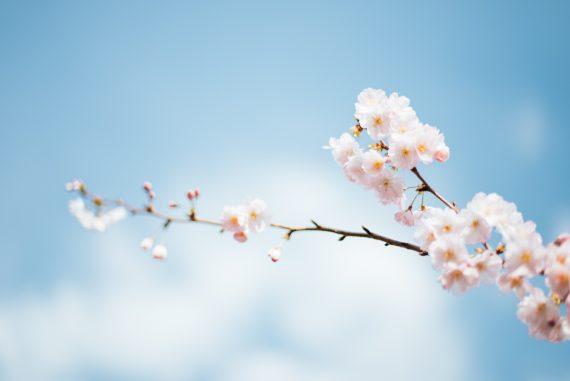 Cómo cuidar el jardín en primavera