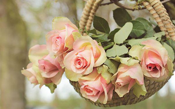 decorar con rosas el jardín
